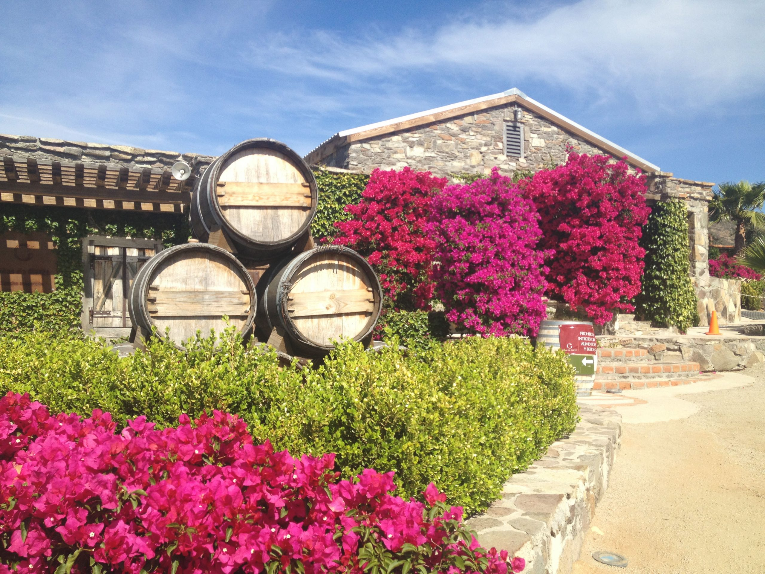 "A young winery in the Mexican ""Napa Valley"""